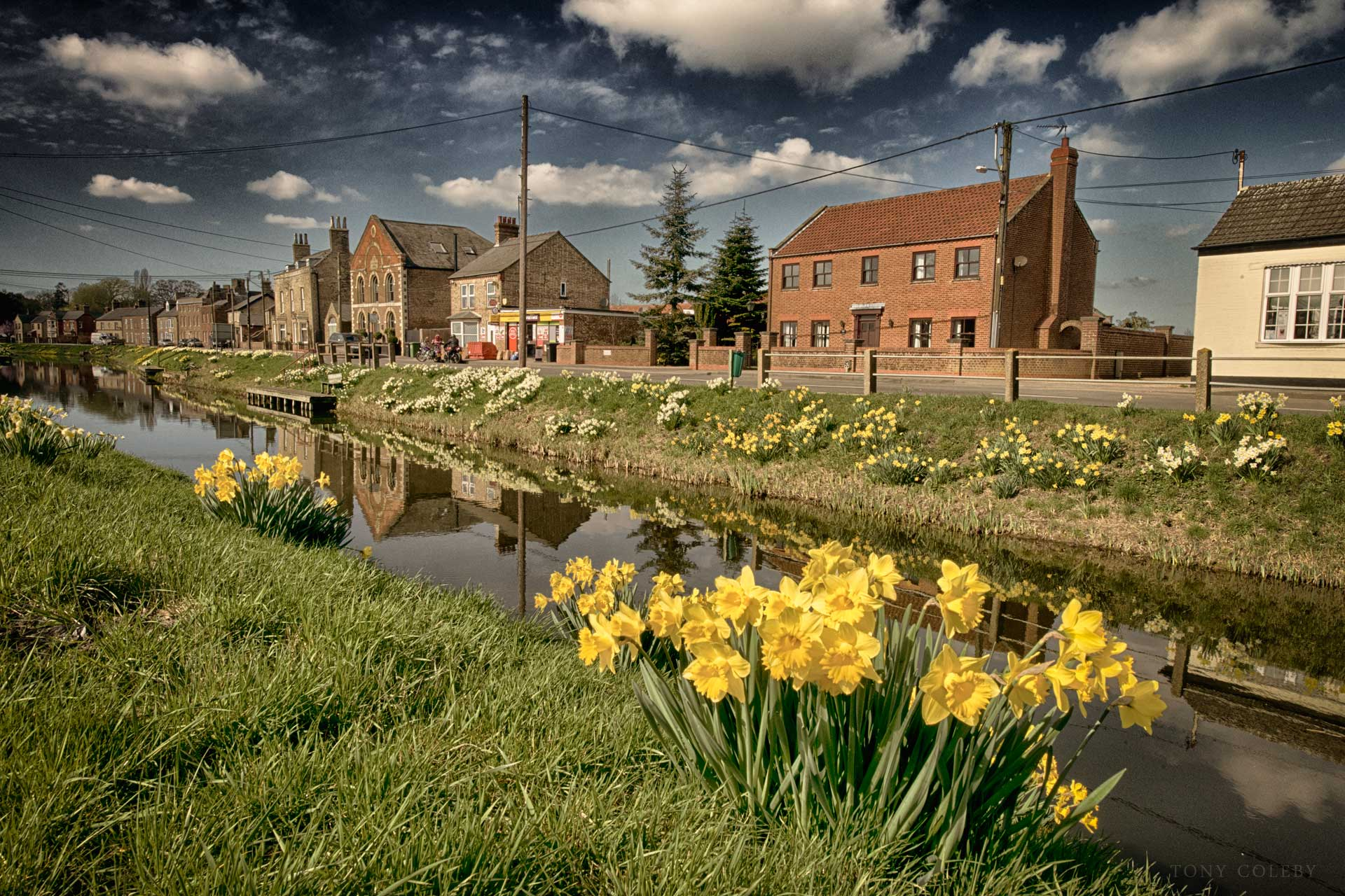 """Daffodils on the River Great Ouse in Upwell/ Outwell, Norfolk"" (2017). Fenland is quite nice really."